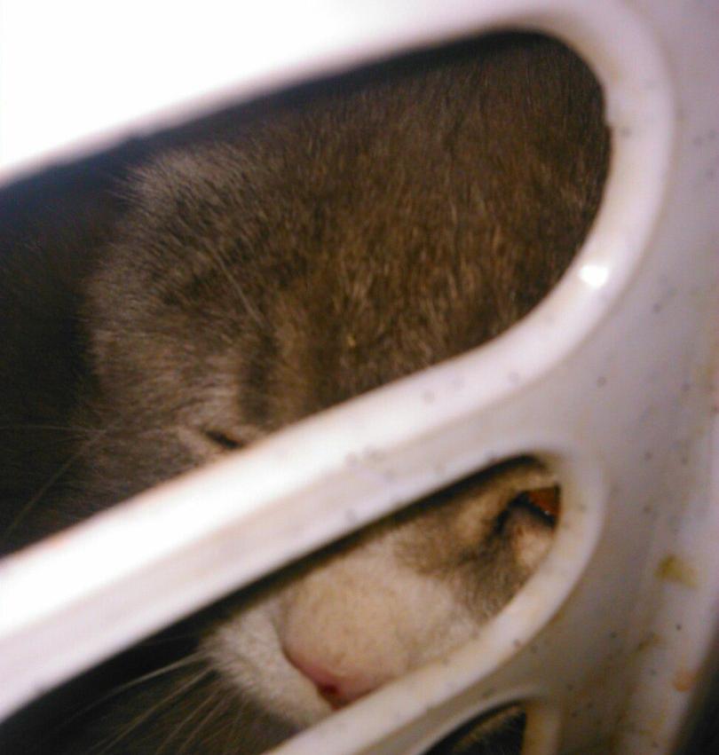 Из корзины для грязного белья, обмотанной скотчем, с укором смотрели глаза... Это прибыл счастливый кот! рис 5
