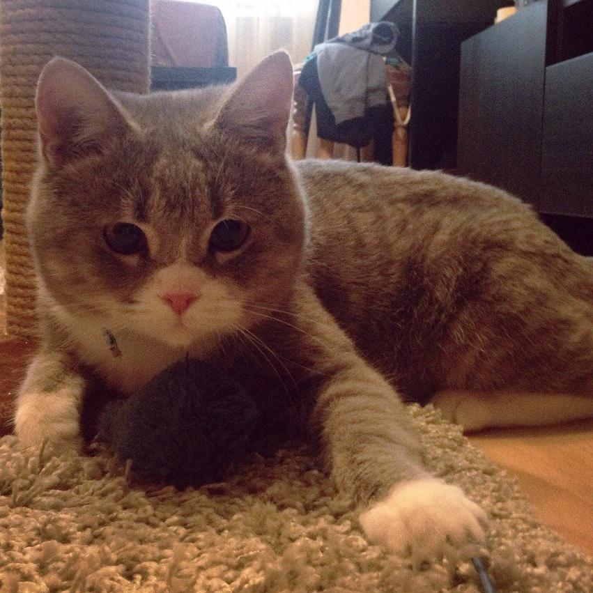 Из корзины для грязного белья, обмотанной скотчем, с укором смотрели глаза... Это прибыл счастливый кот! рис 4