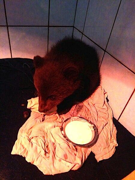 Про диких животных, которые всех удивили! Спасение ослика-сюрприза, молочного медвежонка и йога-львицы! рис 20