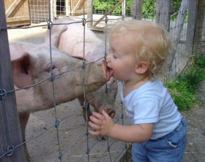 Ребенок целует свинью в пятачок