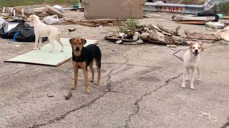 confronted-woman-abandoned-dogs-texas-vinegret-3
