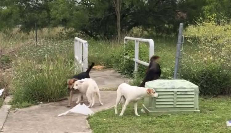 confronted-woman-abandoned-dogs-texas-vinegret-9
