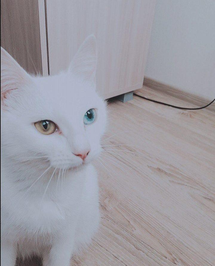 """""""Беременная глухая кошка с Авито? Рискнём!"""" Никому не нужная мать оказалась чудом)"""