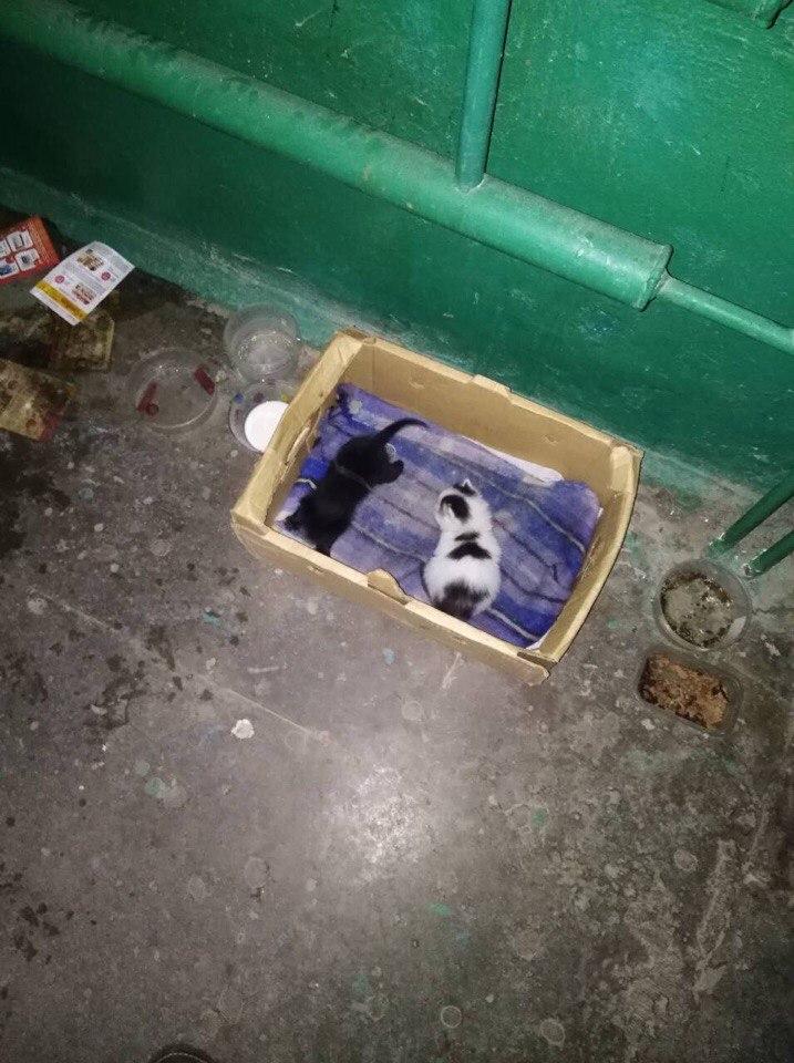 Котят подбросили в подъезд! Двухнедельные крохи остались совсем одни...