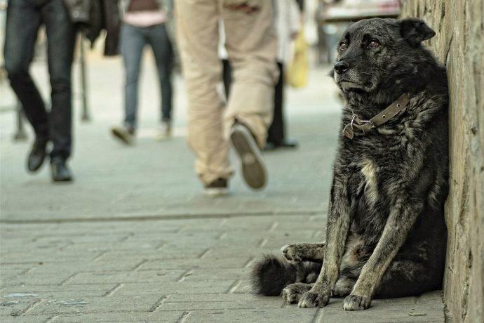 Черный пес сидит у стены на улице