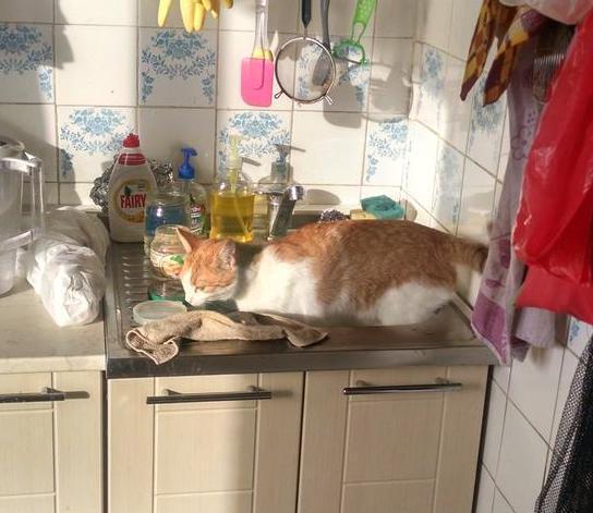Кошки всякие нужны, кошки всякие важны... А Яся у нас - сантехник!) рис 3