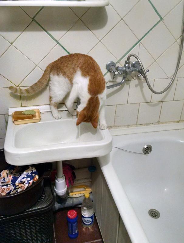 Кошки всякие нужны, кошки всякие важны... А Яся у нас - сантехник!) рис 2