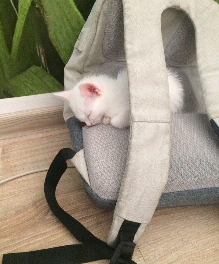 """""""Беременная глухая кошка с Авито? Рискнём!"""" Никому не нужная мать оказалась чудом) рис 11"""