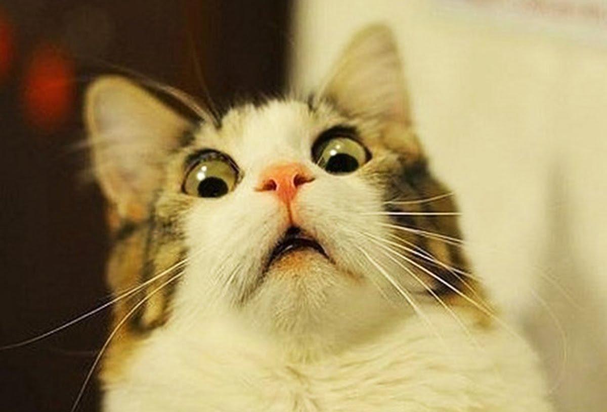 Прикольное выражение морды кота :)