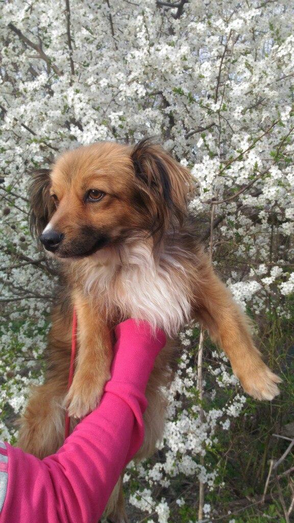 Голодному псу дали сосиску, а он... отнёс её кошке! История бездомного Вайзика с ушами-бабочками рис 3