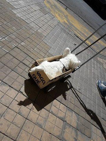 Понурого пса тащили в ящике со странной надписью. Люди подошли посочувствовать - и опа!.. рис 3