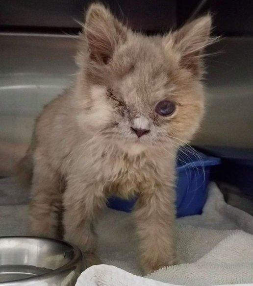 Котёнок, найденный в кустарнике, был похож на несчастного совёнка... Но превратился в обаятельную принцессу! :) рис 3