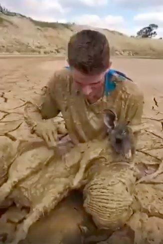 """""""На поверхности торчали только уши..."""" Подросток нырнул в болото, чтобы спасти кенгурёнка! рис 2"""