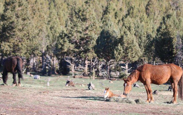 Их разлучили на полгода... Встреча кудрявого коня с его любимой закончилась сюрпризом!) рис 10