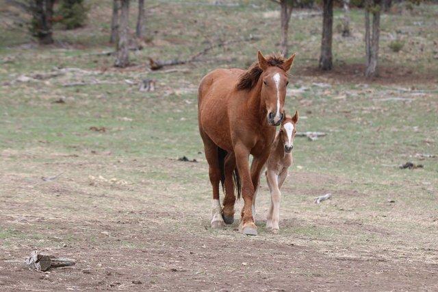 Их разлучили на полгода... Встреча кудрявого коня с его любимой закончилась сюрпризом!) рис 9