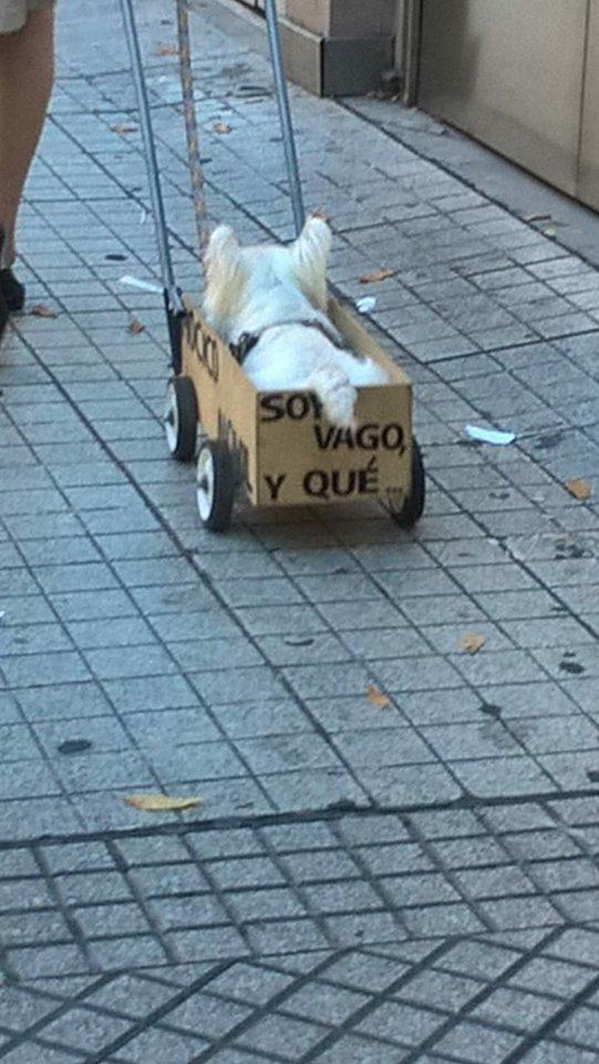 Понурого пса тащили в ящике со странной надписью. Люди подошли посочувствовать - и опа!.. рис 4