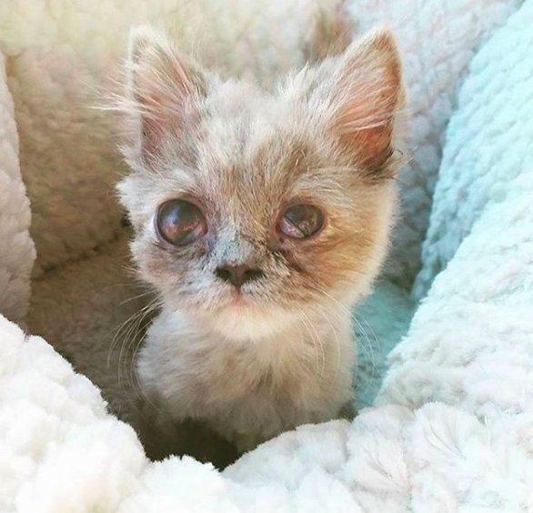 Котёнок, найденный в кустарнике, был похож на несчастного совёнка... Но превратился в обаятельную принцессу! :) рис 2