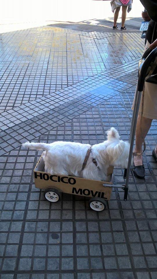 Понурого пса тащили в ящике со странной надписью. Люди подошли посочувствовать - и опа!.. рис 5
