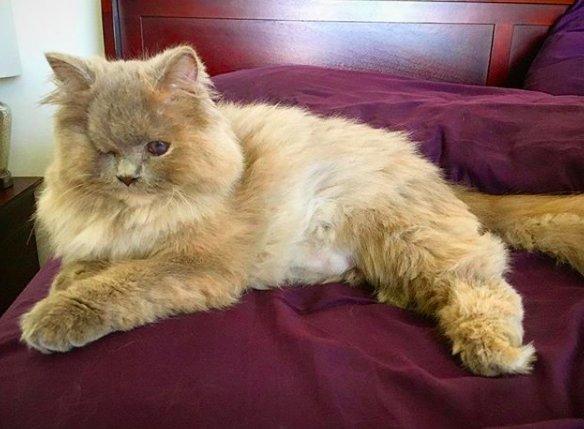 Котёнок, найденный в кустарнике, был похож на несчастного совёнка... Но превратился в обаятельную принцессу! :) рис 11