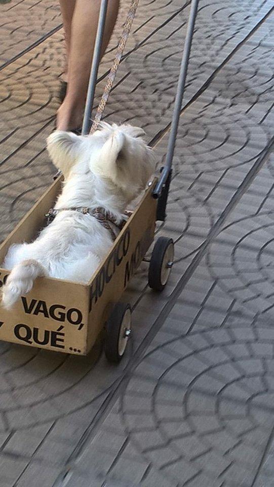 Понурого пса тащили в ящике со странной надписью. Люди подошли посочувствовать - и опа!.. рис 2