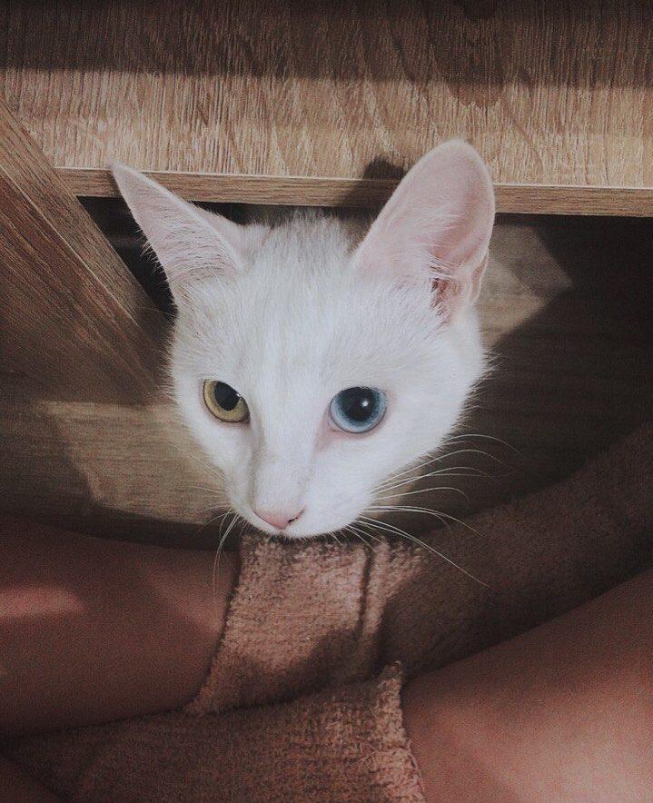 """""""Беременная глухая кошка с Авито? Рискнём!"""" Никому не нужная мать оказалась чудом) рис 13"""