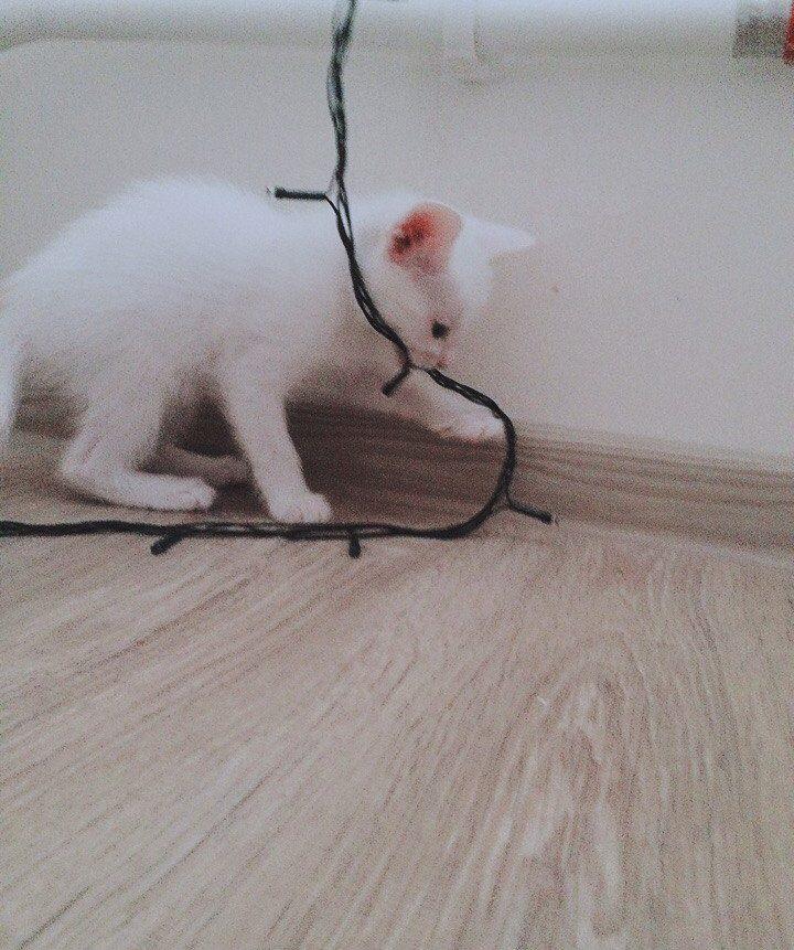 """""""Беременная глухая кошка с Авито? Рискнём!"""" Никому не нужная мать оказалась чудом) рис 12"""
