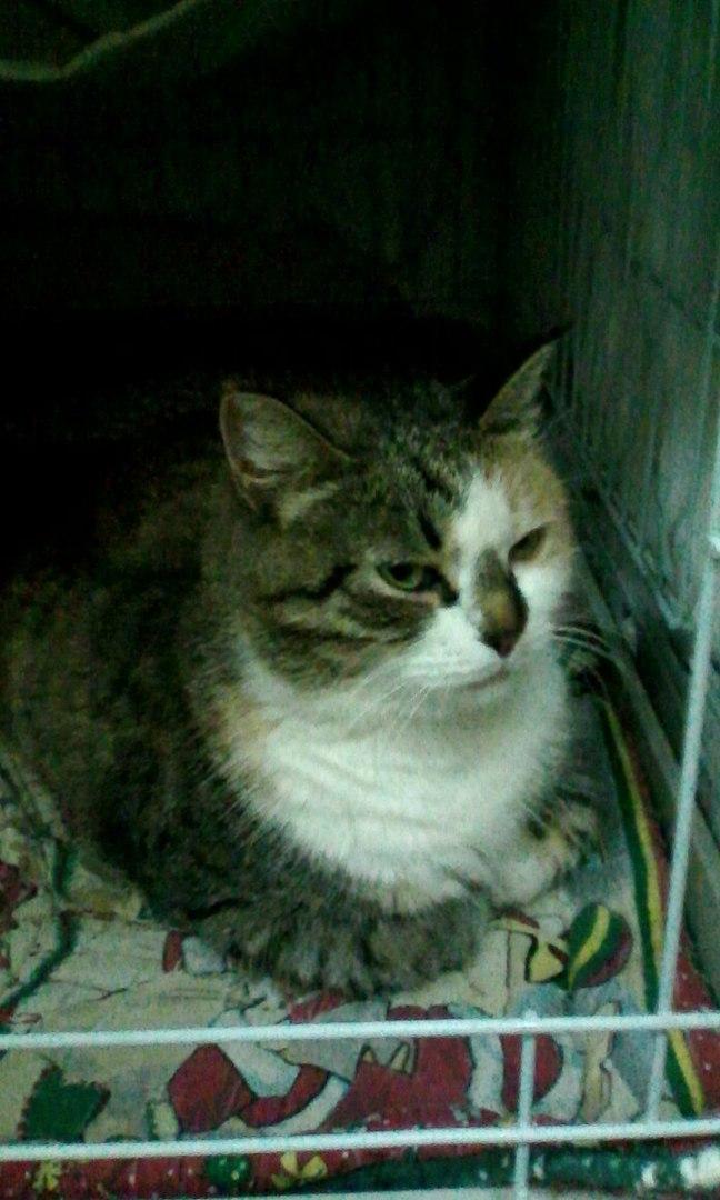 """Днём кошка спала внутри, а на ночь её выставляли на улицу!"" Латифа не ждала любви, но она пришла...) рис 3"
