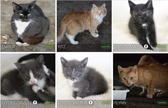 """""""Мы стали перед бульдозером, чтобы защитить малышей!"""" История котёнка, спасшего 60 пушистых душ рис 8"""