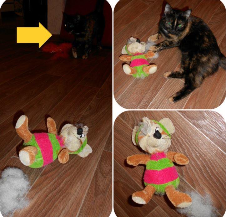 """""""Вода забулькала, поднялась - и из глубин туалета вылез котёнок!!! Я, беременная, разревелась..."""" рис 3"""