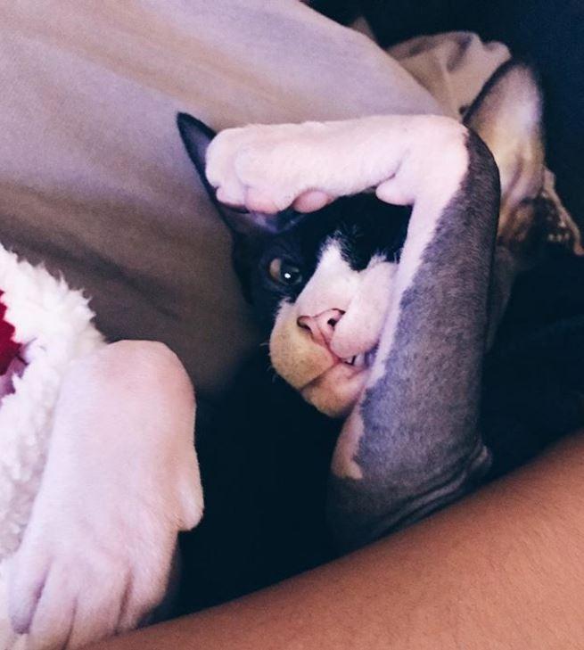 """""""Стой, замри, смотри!"""" Кот с розовыми коленками повелевает миром... сидя на холодильнике!) рис 11"""