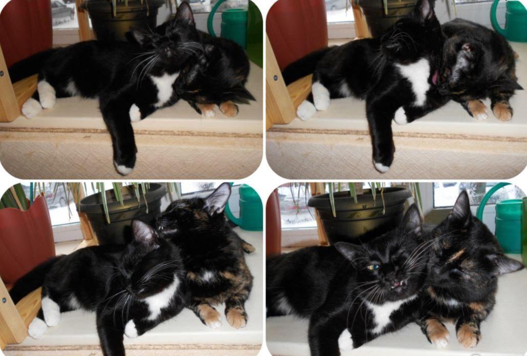 """""""Вода забулькала, поднялась - и из глубин туалета вылез котёнок!!! Я, беременная, разревелась..."""" рис 10"""
