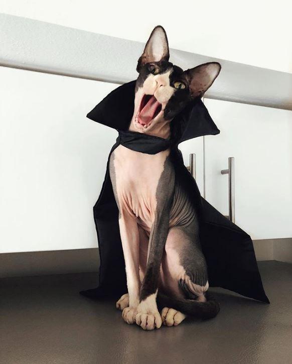"""""""Стой, замри, смотри!"""" Кот с розовыми коленками повелевает миром... сидя на холодильнике!) рис 6"""