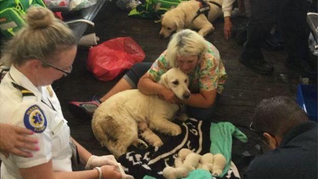 Собака пассажирки стала рожать в зале аэропорта! Роды закончились большим сюрпризом) рис 6