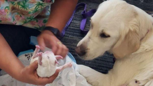 Собака пассажирки стала рожать в зале аэропорта! Роды закончились большим сюрпризом) рис 4