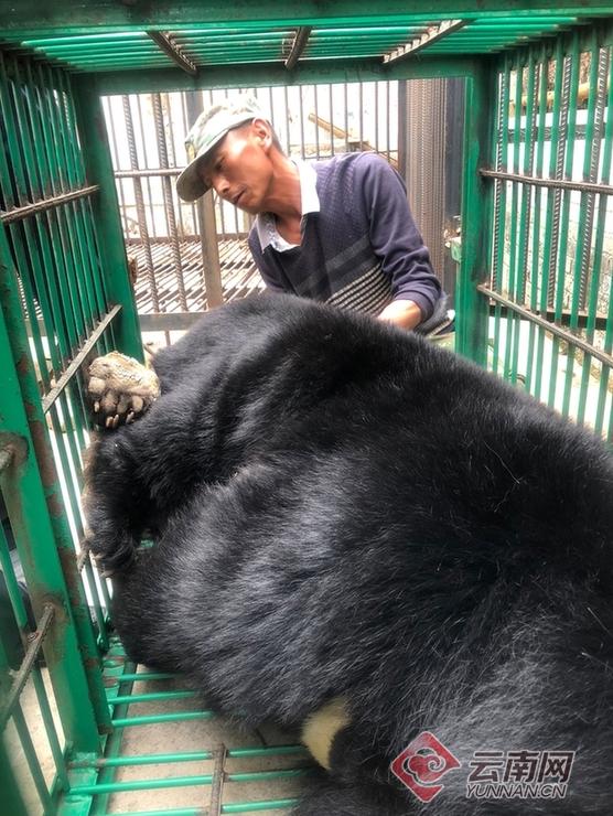 Собака-оборотень?! Китайцы купили щенка мастифа, а потом не поняли, что с ним произошло... рис 7