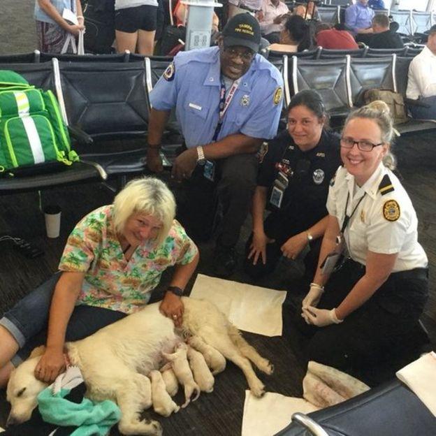 Собака пассажирки стала рожать в зале аэропорта! Роды закончились большим сюрпризом) рис 2