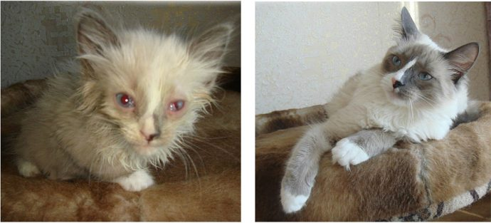 """""""Красивые кошки в страшной квартире... Хочу это забыть!"""" + 10 фото красивых спасённых котов рис 11"""