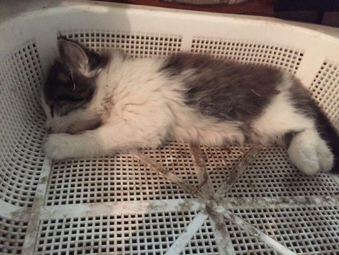 Котёнок в красных пятнах лежал у порога. Парень повёз усыпить страдальца... и привёз обратно!) рис 2