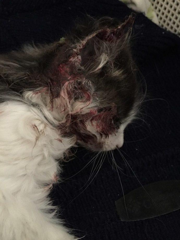 Котёнок в красных пятнах лежал у порога. Парень повёз усыпить страдальца... и привёз обратно!) рис 3