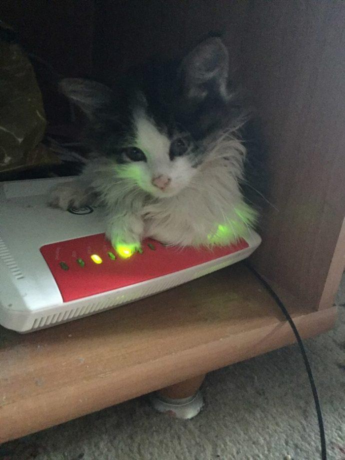 Котёнок в красных пятнах лежал у порога. Парень повёз усыпить страдальца... и привёз обратно!) рис 7