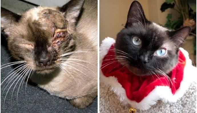 """""""Красивые кошки в страшной квартире... Хочу это забыть!"""" + 10 фото красивых спасённых котов рис 13"""