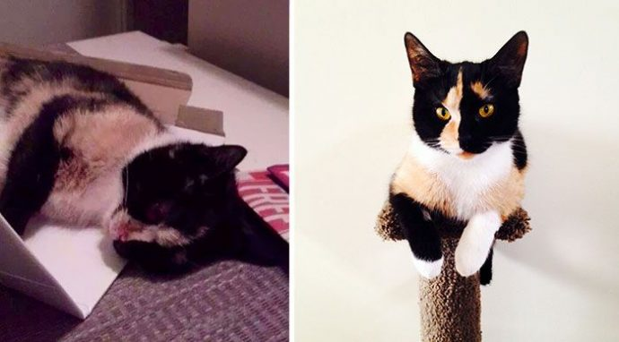 """""""Красивые кошки в страшной квартире... Хочу это забыть!"""" + 10 фото красивых спасённых котов рис 8"""
