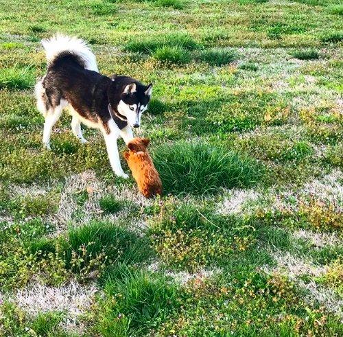 """""""Собака-крот тоже хочет жить!"""" Ради щенка, спасённого от жестокой процедуры, все в доме носят колокольчики! рис 7"""