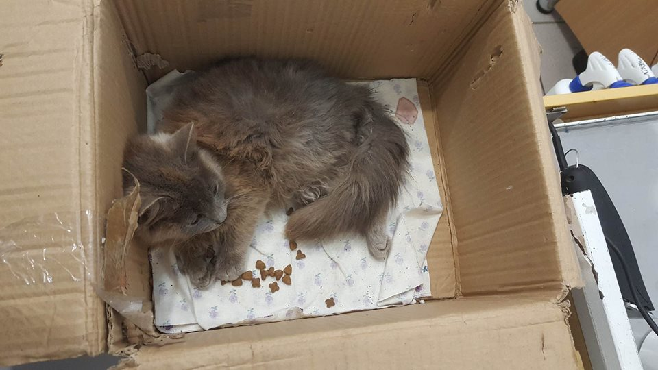 Она ползла к людям на животе! Вы обрадуетесь, увидев кошку, которая смогла :) рис 2