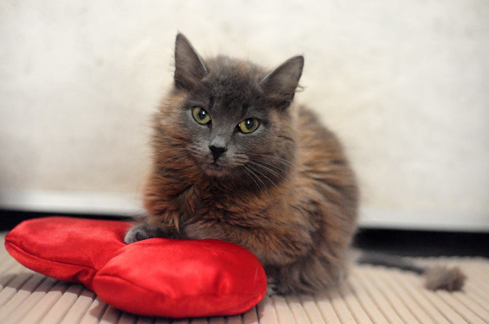 Она ползла к людям на животе! Вы обрадуетесь, увидев кошку, которая смогла :) рис 3