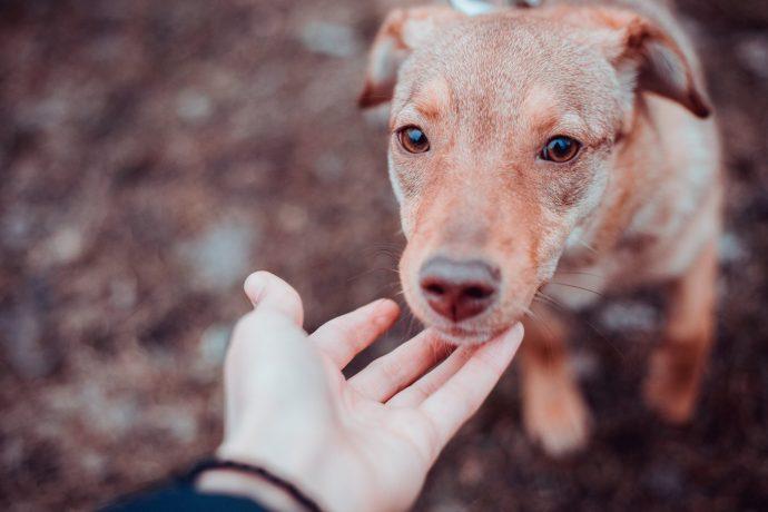 Киев, очень нужен корм для приюта! У каждой из этих голодных собачек - своя история... рис 6