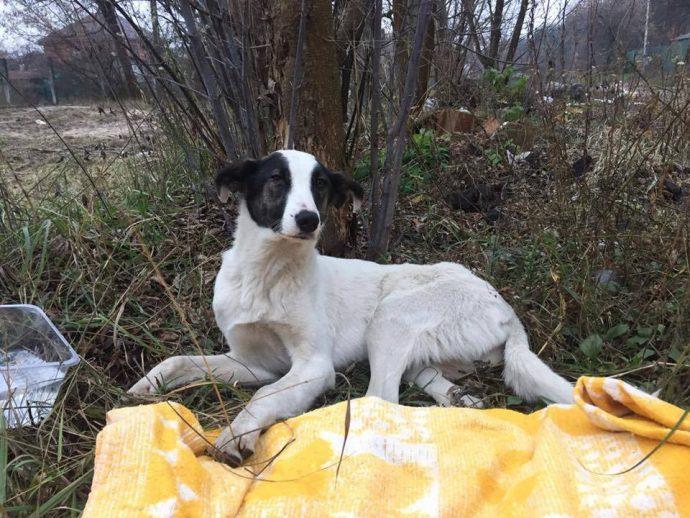 Киев, очень нужен корм для приюта! У каждой из этих голодных собачек - своя история...