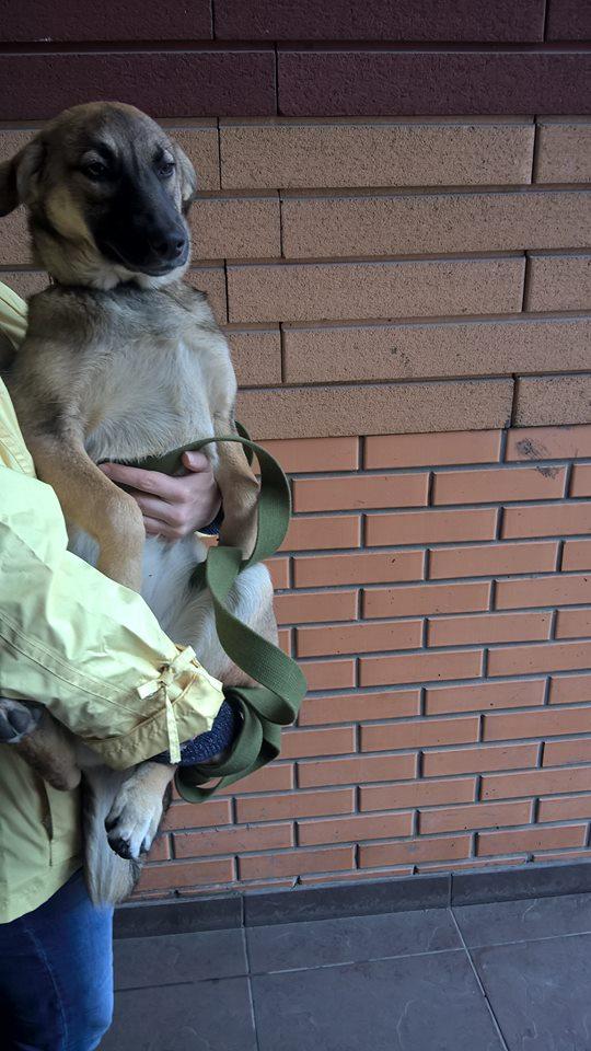 Киев, очень нужен корм для приюта! У каждой из этих голодных собачек - своя история... рис 5