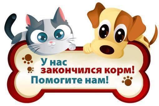 Киев, очень нужен корм для приюта! У каждой из этих голодных собачек - своя история... рис 17
