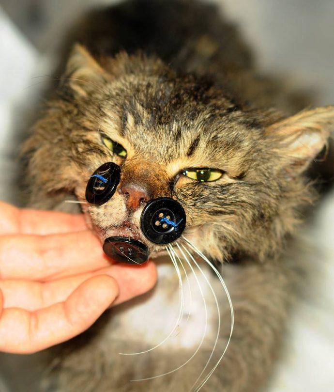 """""""Пришейте мне счастье, крепко-накрепко..."""" История кота Киш-Миша, который всё преодолел! рис 4"""